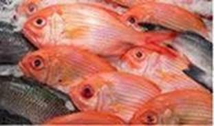 Seafood (Atomic Spectroscopy))